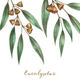Watercolor eucalyptus leaves Stock Photos