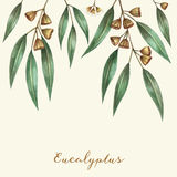 Watercolor eucalyptus leaves Stock Photography