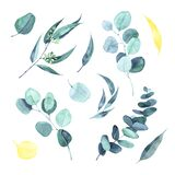 Watercolor eucalyptus round leaves and branches set. Hand painted baby, seeded and silver dollar eucalyptus elements