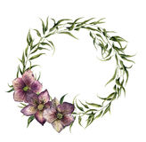 Watercolor eucalyptus wreath with hellebore flowers. Eucalyptus Royalty Free Stock Images