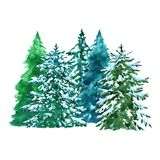 Watercolor evegreen spruce trees illustration with snow, isolated on white background. Winter forest landscape stock illustration