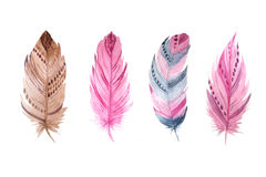 Watercolor exotic feathers set Royalty Free Stock Photography