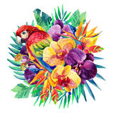 Watercolor exotic flowers and ara parrot Royalty Free Stock Photography