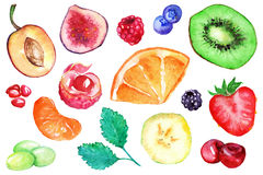 Watercolor exotic fruit berry slice set isolated vector.  Royalty Free Stock Photography