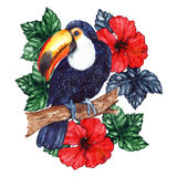 Watercolor exotic tropical animal bird toucan flower hibiscus.  Royalty Free Stock Photo