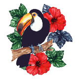 Watercolor exotic tropical animal bird toucan flower hibiscus isolated vector.  Stock Images
