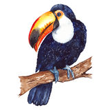 Watercolor exotic tropical animal bird toucan sitting on branch isolated.  Stock Photos