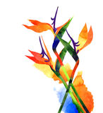 Watercolor exotic tropical flower, strelitzia on white background Royalty Free Stock Photography