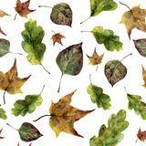 Watercolor fall leaves seamless pattern. Hand painted oak, maple, aspen fall leaves ornament isolated on white Royalty Free Stock Images