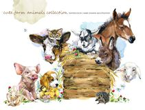Watercolor farms animal collection. Cute hand drawn illustration of foal, piggy, chicken, dog, duckling, sheep, goat, calf, donkey