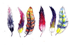 Watercolor feather Stock Images