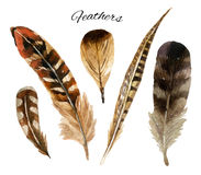 Watercolor feather set royalty free illustration