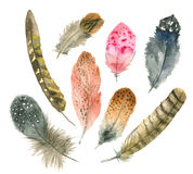 Watercolor feather set stock illustration