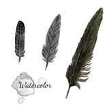 Watercolor feathers. Black feather of crow. Hand drawn vector set. Stock Photo