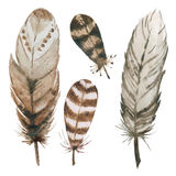Watercolor feathers Stock Photography