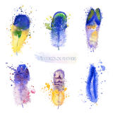 Watercolor feathers. Royalty Free Stock Image