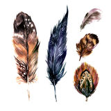 Watercolor Feathers Set Stock Photo