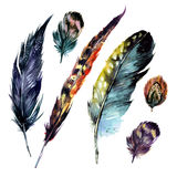Watercolor Feathers Set. Hand drawn illustration in boho style. Rustic design elements for wedding invitation, greeting card and t-shirt. on white background vector illustration