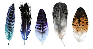 Watercolor feathers. Set of watercolor feathers isolated on white background. Beautiful and gentle watercolor hand drawn feathers for your design, fabric vector illustration