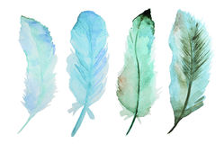 Watercolor feathers vector illustration