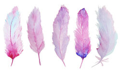 Watercolor feathers Royalty Free Stock Photography