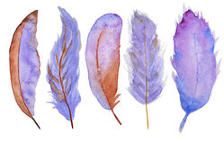 Watercolor feathers Stock Photos