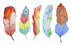 Watercolor feathers Royalty Free Stock Photos