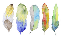 Watercolor feathers Royalty Free Stock Photo