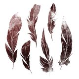Watercolor feathers. A set of silhouettes of watercolor feathers on a white backgroun Stock Photo