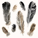 Watercolor feathers set on white background Stock Photography