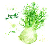 Watercolor fennel. Hand drawn watercolor illustration of fennel with paint splashes Stock Photos