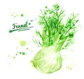 Watercolor fennel Stock Photos