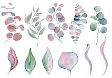Watercolor fern and eucalyptus leaves. Hand drawn illustration Royalty Free Stock Images