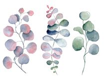 Watercolor fern and eucalyptus leaves. Hand drawn illustration Stock Photo