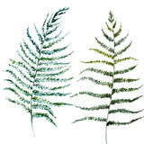 Watercolor fern leaves Stock Photos