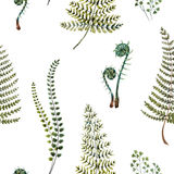 Watercolor fern pattern. Beautiful pattern with nice watercolor fern leaves Royalty Free Stock Photography