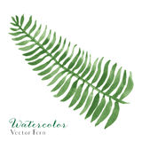 Watercolor Fern. Vector Watercolor Fern Illustration. 7 Colors, EPS 8 Stock Image