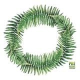 Watercolor fern wreath. Green watercolor wreth of fern branches. Hand painted natural design isolated on white background Royalty Free Stock Images