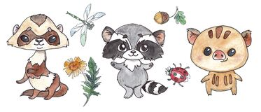 Watercolor ferret, raccoon, wild boar, dragonfly, ladybug, dandelion, acorn