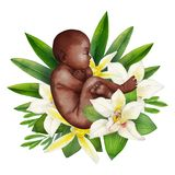 Watercolor fetus with floral decorations. African American baby in the fetal position. Hand painted design isolated on white background Stock Photography