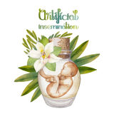 Watercolor fetus in the glass bottle Royalty Free Stock Images