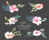 Watercolor field carnations and green branches bouquets set. Hand drawn on a dark backgroundv Royalty Free Stock Image