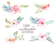 Watercolor field carnations and green branches bouquets set. Hand drawn on a white background Royalty Free Stock Images