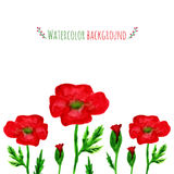 Watercolor field with red poppies. Banner with red Royalty Free Stock Photos