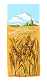 Watercolor Field of Wheat, Barley or Rye Royalty Free Stock Image