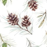 Watercolor fir cone vector pattern. Beautiful vector seamless pattern with watercolor fir cones Royalty Free Stock Images
