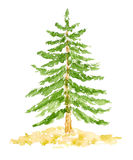 Watercolor Fir Tree, Hand Drawn and Painted. Isolated on White Royalty Free Stock Photography