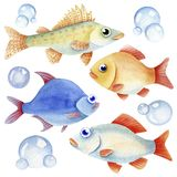 Set of fish. Watercolor fish caracter and bubbles on the white background Royalty Free Stock Photo