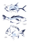 Watercolor fish illustration. Good for package, print design, article or book illustration, any advertising and graphic design Stock Image