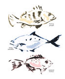 Watercolor fish illustration. Good for package, print design, article or book illustration, any advertising and graphic design Royalty Free Stock Image